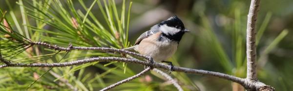 Matins ornitològics: Parc de Montjuïc II