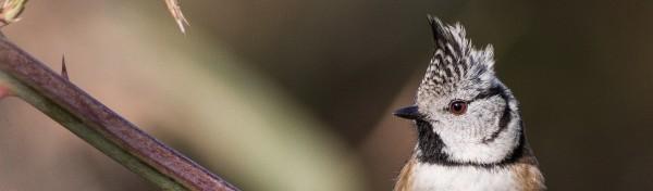 Matí ornitològic: Parc de la Ciutadella