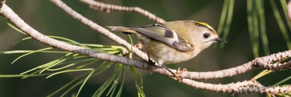 Matins ornitològics: Parc de Montjuïc